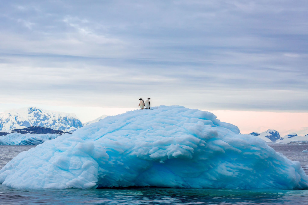 Duo penguins on an Iceberg