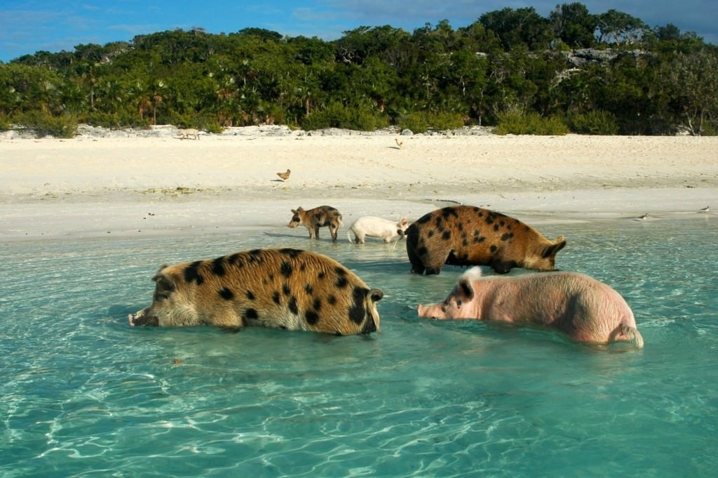 20-places-where-animals-outnumber-people_mini