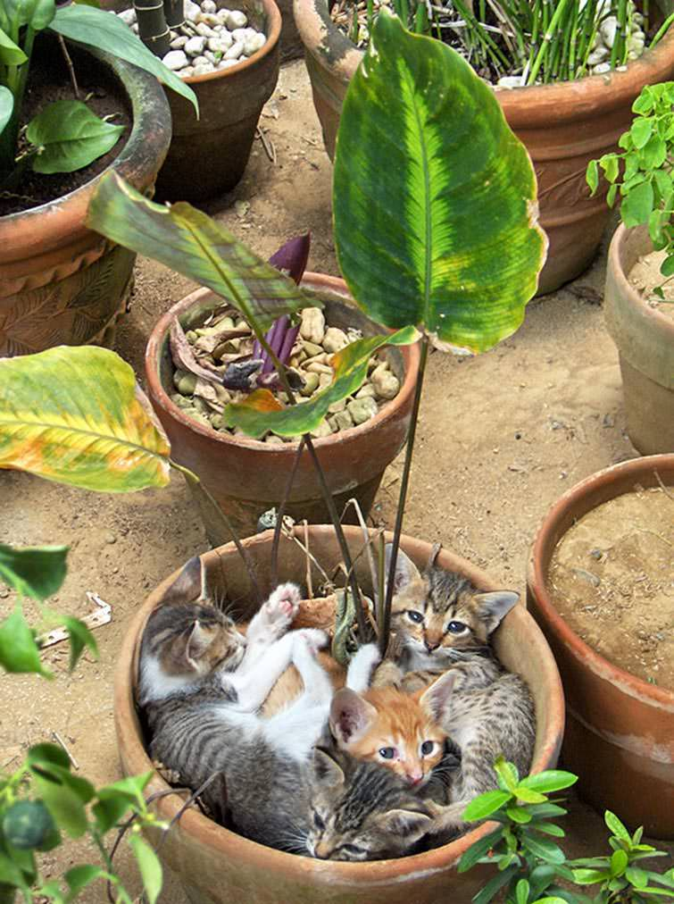 3cat-in-flowerpot-35__605_mini