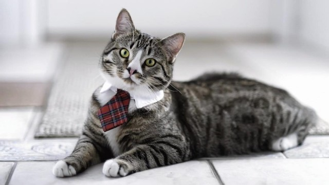 Business-Cat_mini