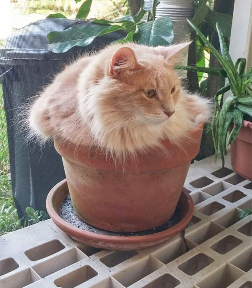 cat-in-flowerpot-3__605_mini