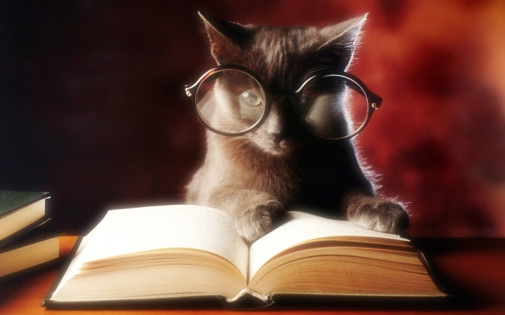 cat-reading-book-2560x1600_mini