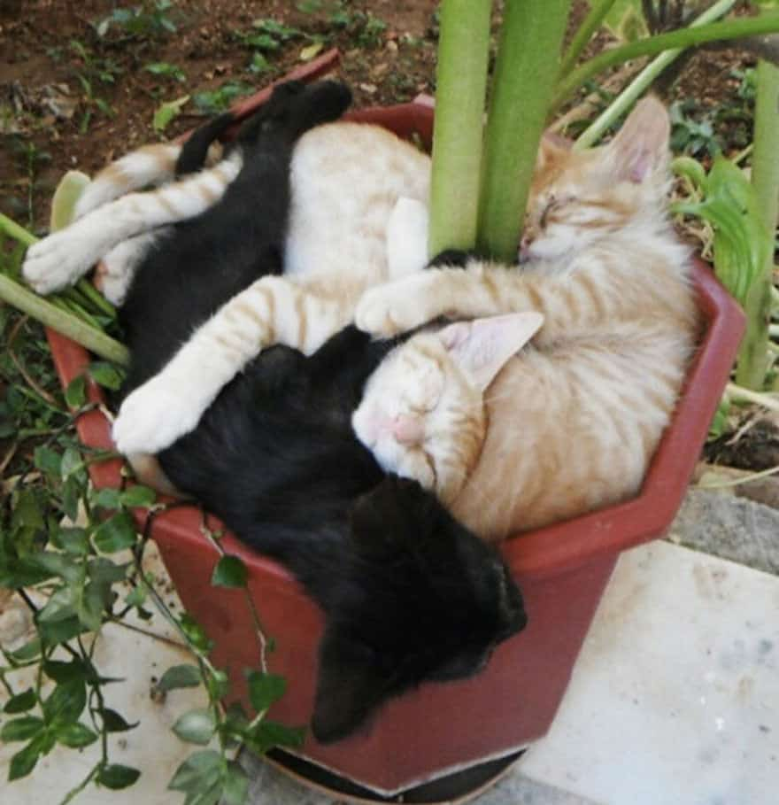 funny-cat-plant-1__605_mini