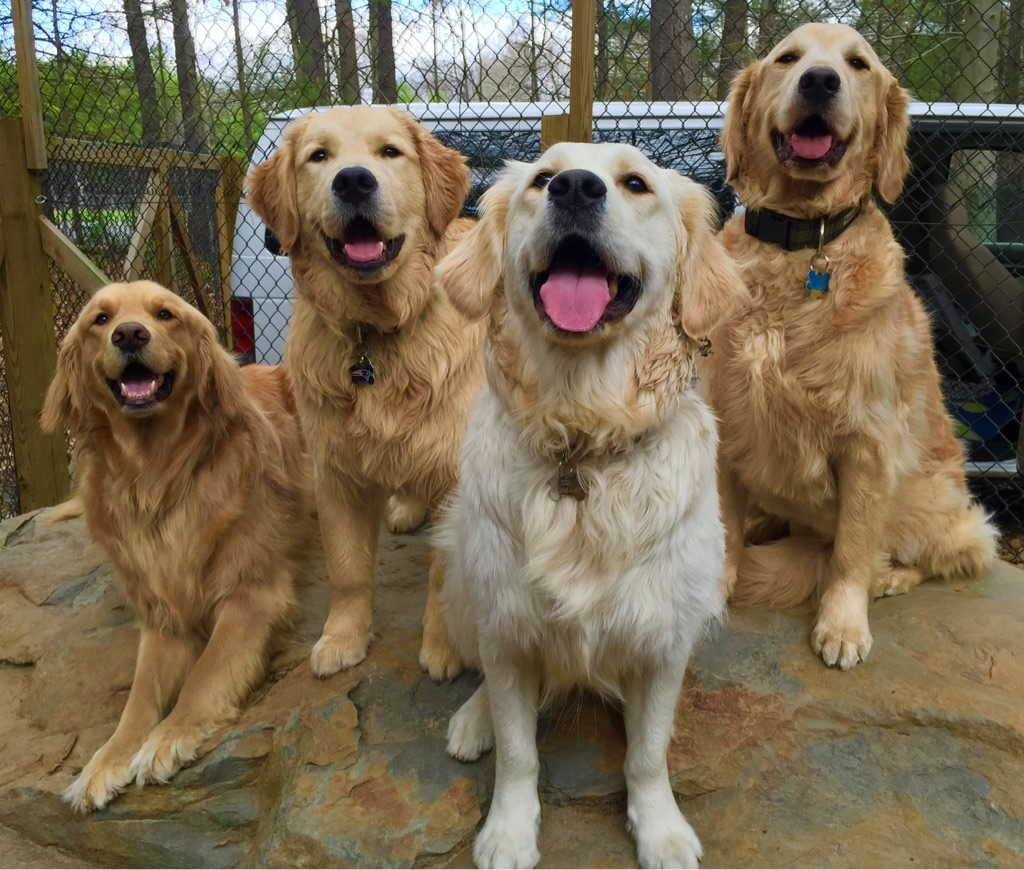 Happy dogs smiling