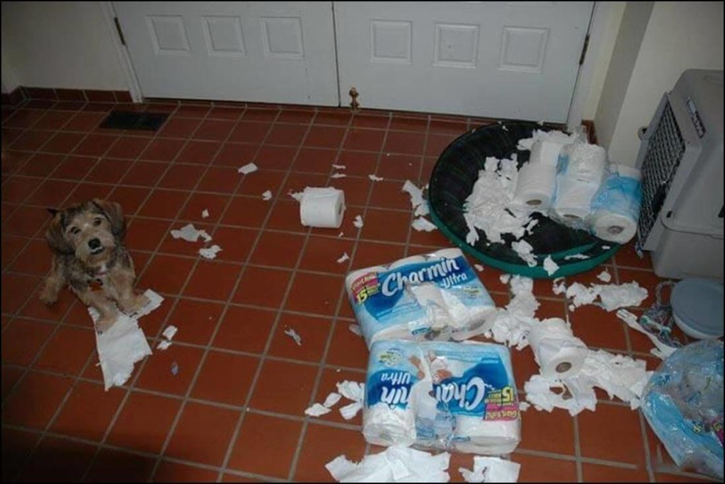 funny-messy-dog-picture-2 (1)