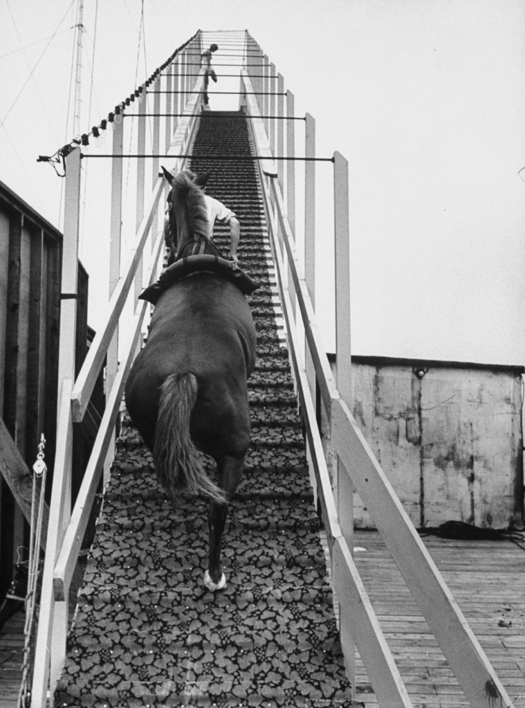 Dimah the horse is escorted up the 40 foot diving platform.  (Photo by Peter Stackpole/The LIFE Picture Collection/Getty Images)