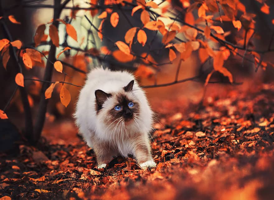 autumn-animals-20__880_mini