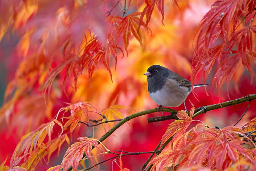 autumn-animals-21__880_mini