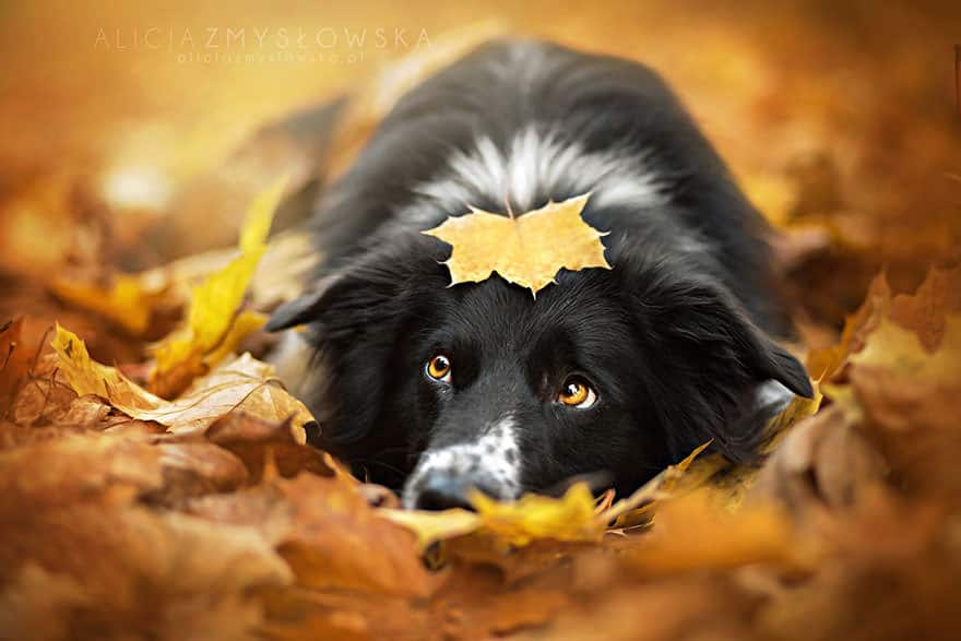autumn-animals-22__880_mini