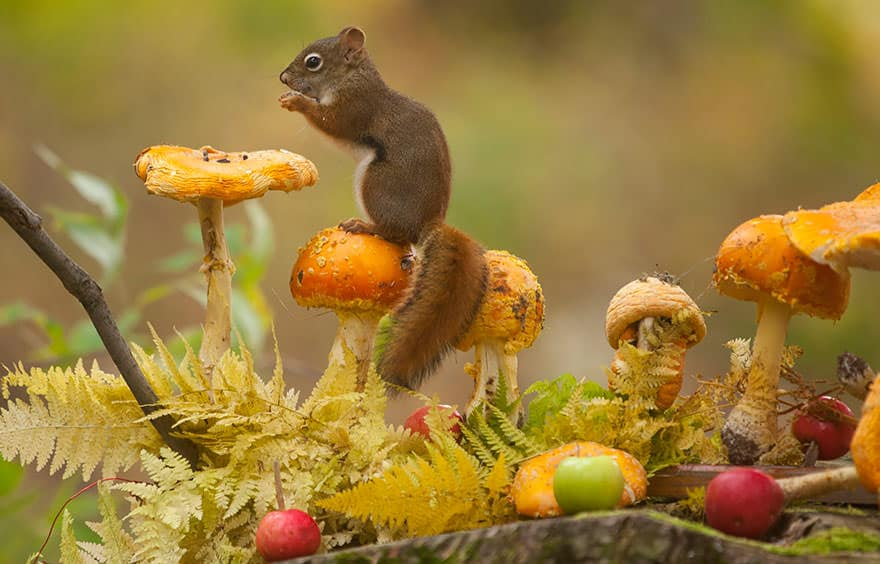 autumn-animals-27__880_mini