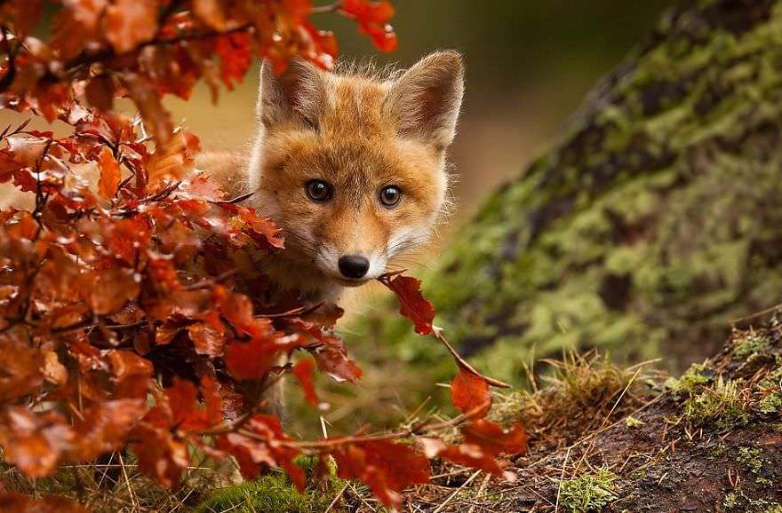 autumn-animals-3__880_mini