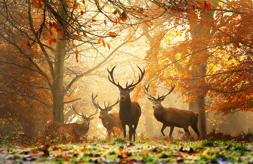 autumn-animals-5__880_mini