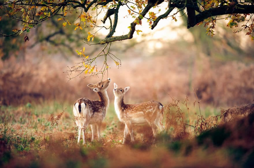 autumn-animals-7__880_mini