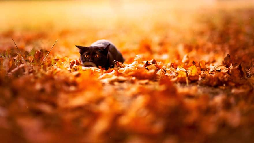autumn-animals-8__880_mini