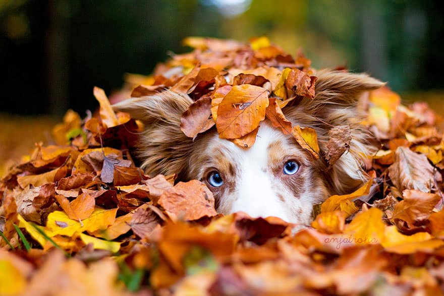 autumn-animals-photgraphy-107__880_mini