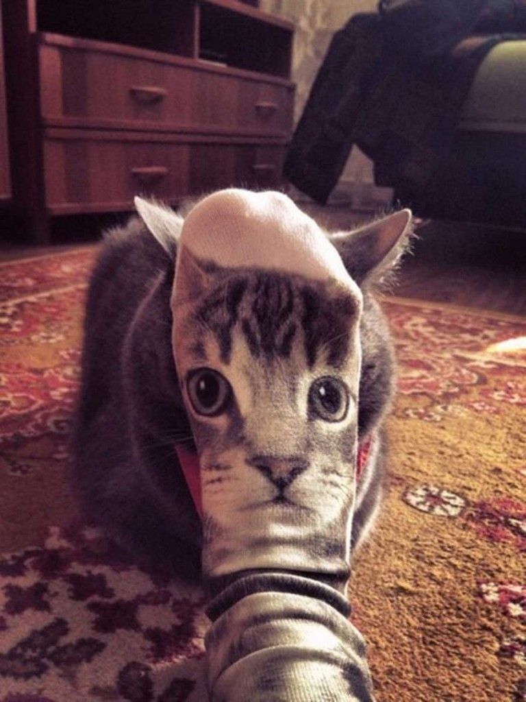 funny-perfectly-timed-cat-5