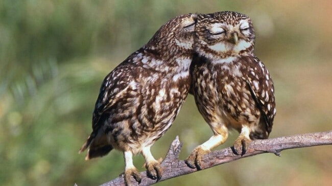 14266360-R3L8T8D-650-owl-photography-cute-100__880