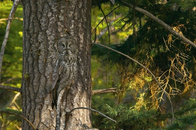 14269410-R3L8T8D-650-owl-photography-35__880