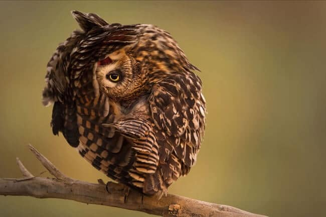 14269710-R3L8T8D-650-owl-photography-1__880