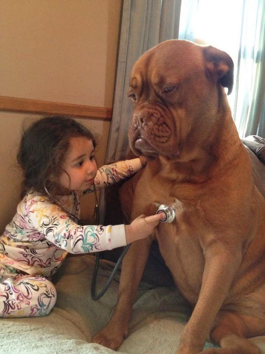11-cute-big-dogs-and-babies-17 (1)