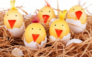 Chickens_Easter