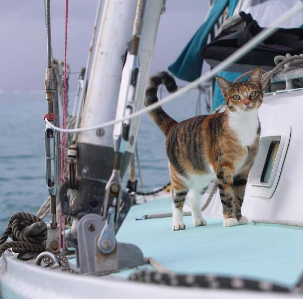the cat on a boat