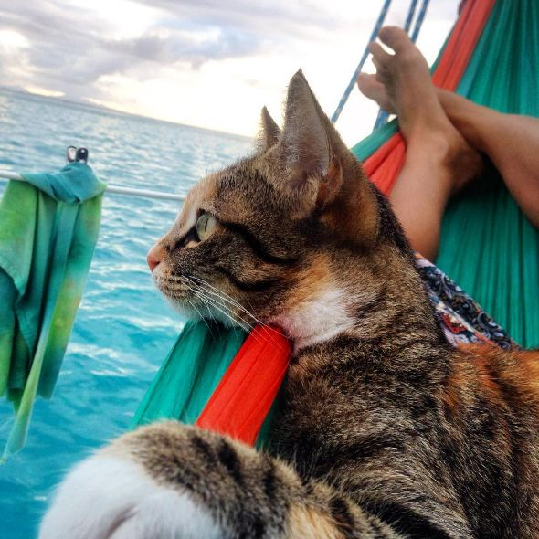 Cat on a sailboat