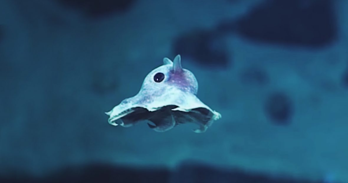 deep-sea-creatures