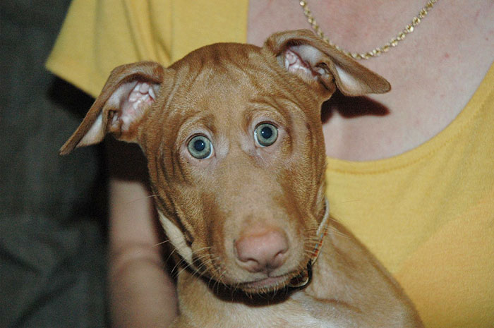 funny-animals-with-front-eyes-14-57da5be31a9d9__700[1]
