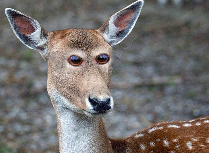 funny-animals-with-front-eyes-15-57da61d734a44__700[1]