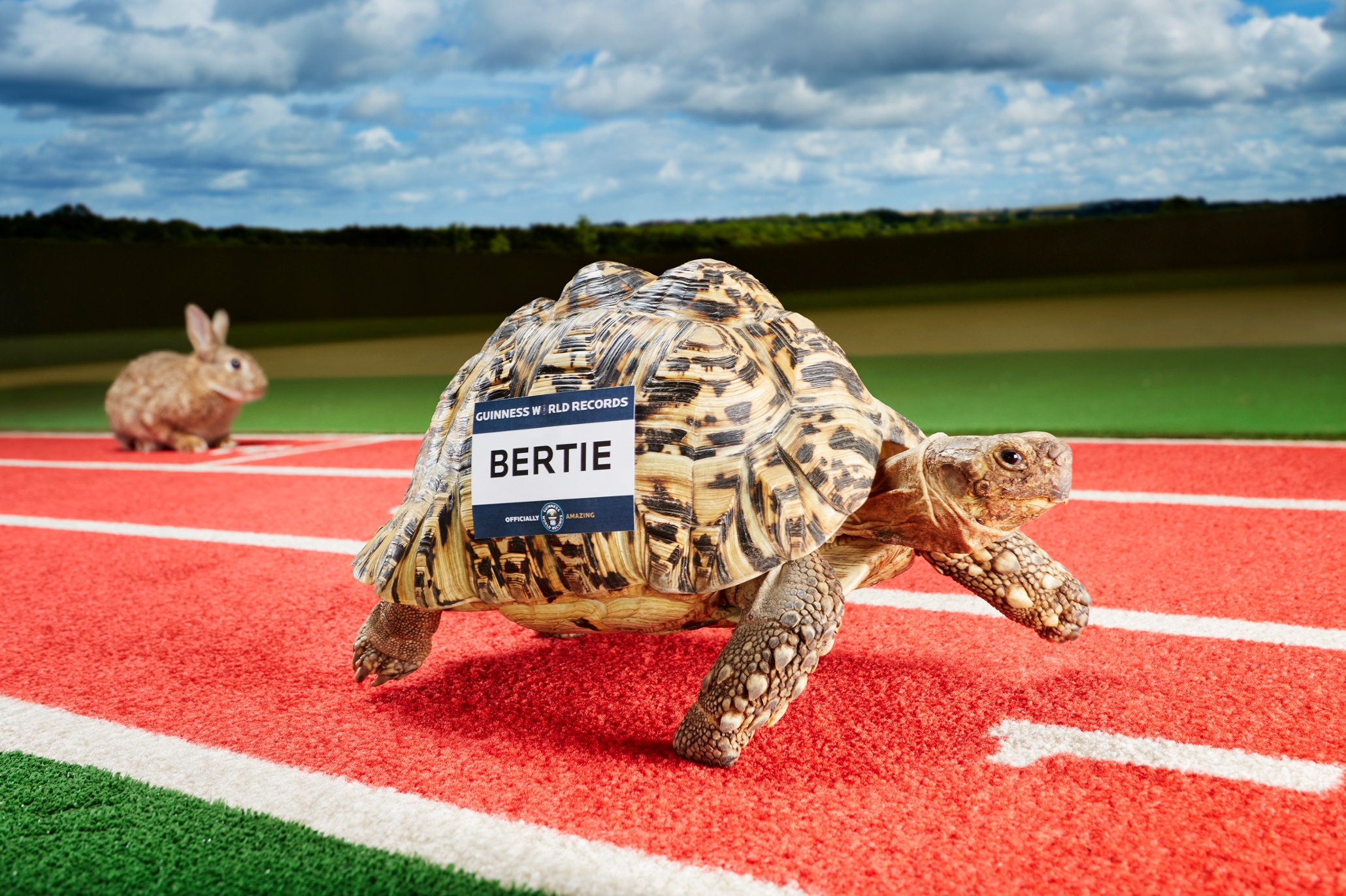 Bertie - Fastest Tortoise Guinness World Records 2015 Photo Credit: Paul Michael Hughes/Guinness World Records