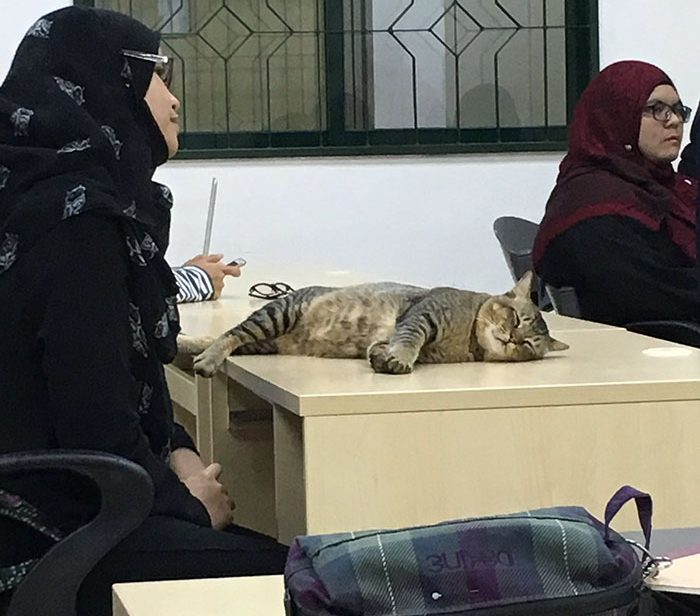 cat-sleeps-university-lecture-malaysia-41