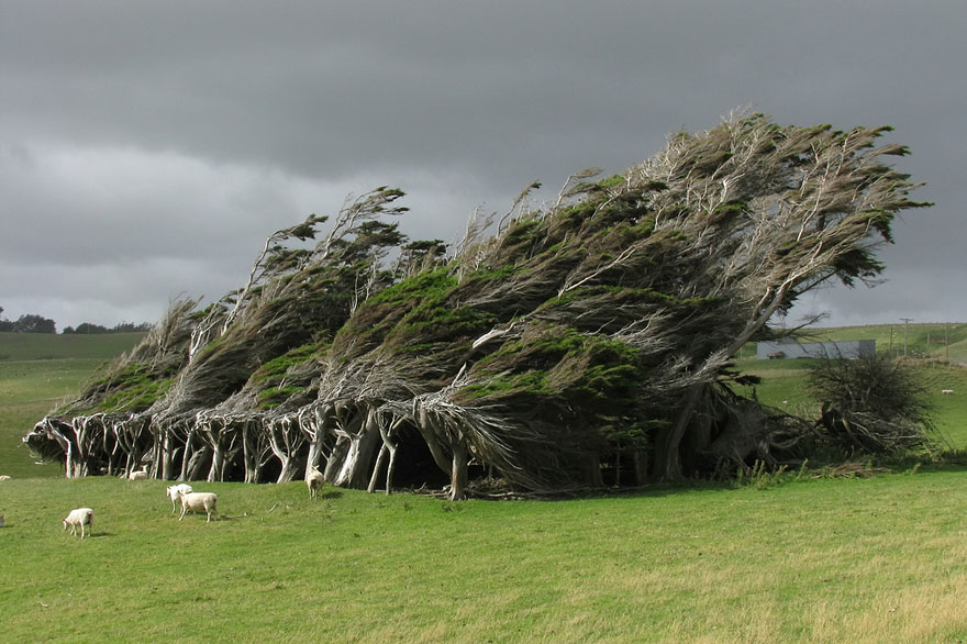 04-Swept-Trees-In-New-Zealand