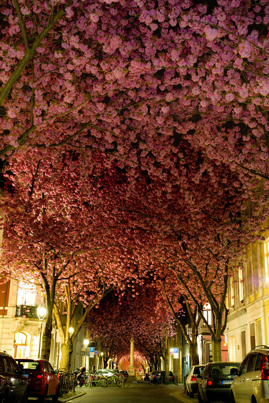 08-Blooming-Cherry-Trees