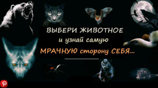 Choose-An-Animal-And-We-Will-Reve