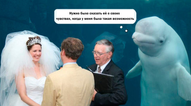 a-beluga-whale-crashed-a-wedding-and-upstaged-the-br